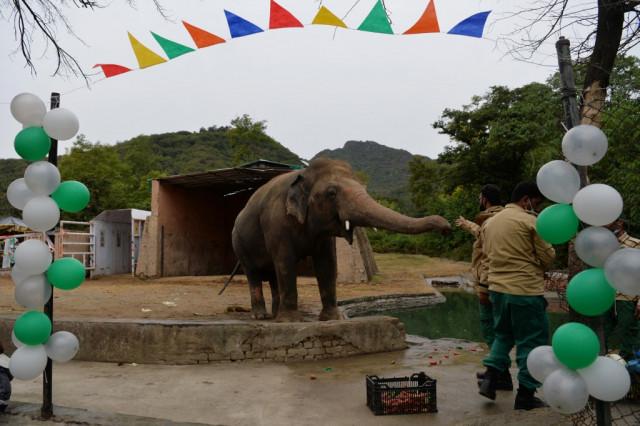 'Do you believe': Pakistan elephant set for flight after Cher campaign