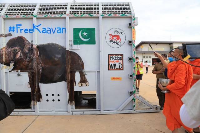 Kaavan Finally Finds a New Home in Cambodia