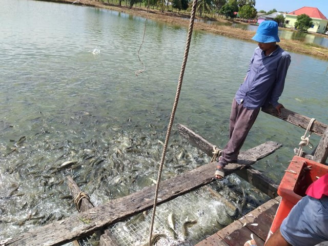 The Agriculture Ministry Appeals to Local Traders to Suspend Vietnamese Fish Imports