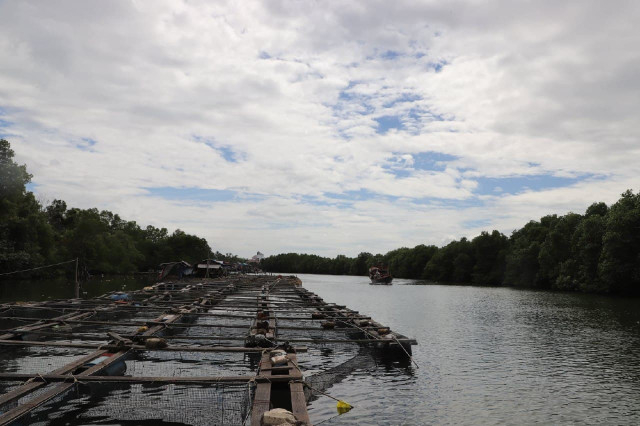 Low Seabass Prices Prompt Fears for Farmers in Preah Sihanouk