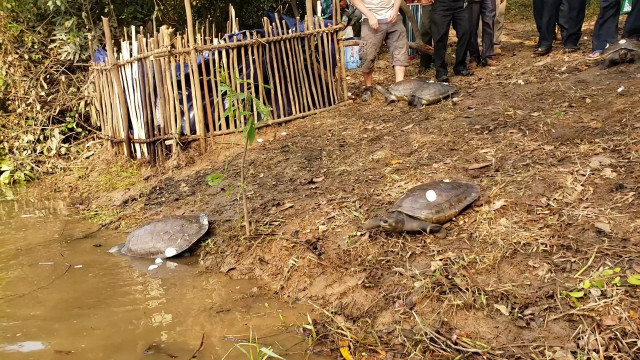 10 Rare Royal Turtles Released into Natural Habitat in Cambodia