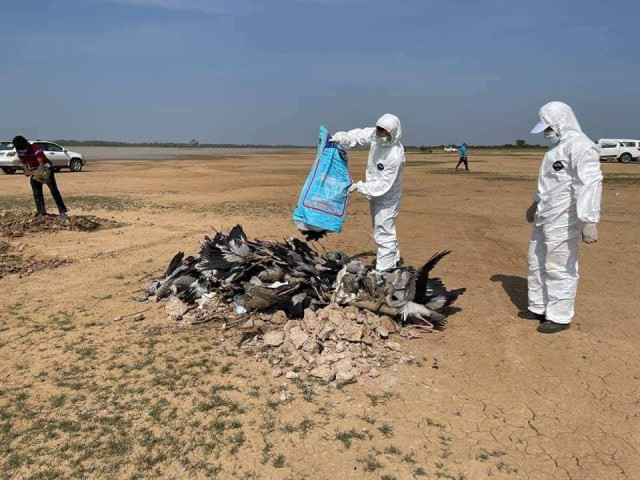 Bird Flu Detected in Prey Veng Province Killing At Least 600 Wild Birds