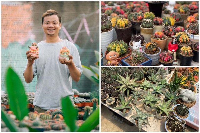 Architect-Turned-Gardener Hopes to Reduce Imports of Succulent Plants from Abroad